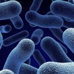 Batteri, Schede informative INAIL – Il rischio biologico per i soccorritori non sanitari dell'emergenza