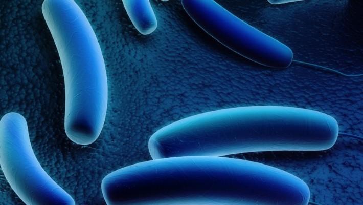 Legionella, pubblicate nuove linee guida